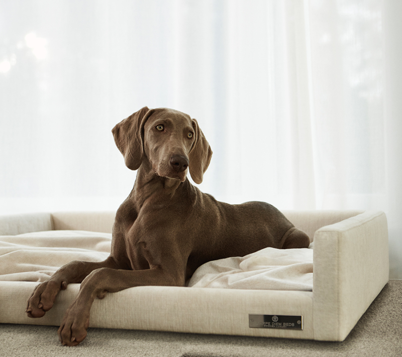 Carpe Diem Hundekurv Large miljøbillede